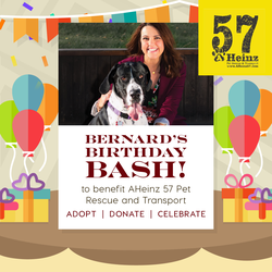 You're Invited to Bernard's Birthday Bash! (Benefitting AHeinz57 Pet Rescue)
